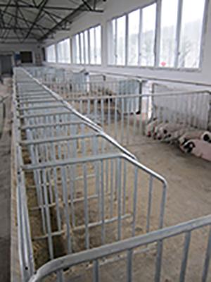 福利化妊娠母猪栏.JPG
